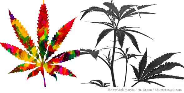ColourBlackPlant.png